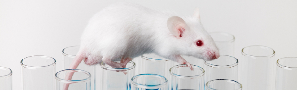 Mouse and Test Tubes